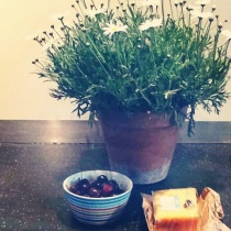 The summer kicked off with a visit from B's sweet and loving mum. She left us with some lovely memories, and a new plant, some cherries, and delicious cheese to boot. She's such a doll!