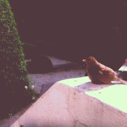 A sad bird who sat by my window at work all day.