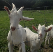 Bex introduces me to the goat farm at Amsterdam Bos and my life is forever changed.
