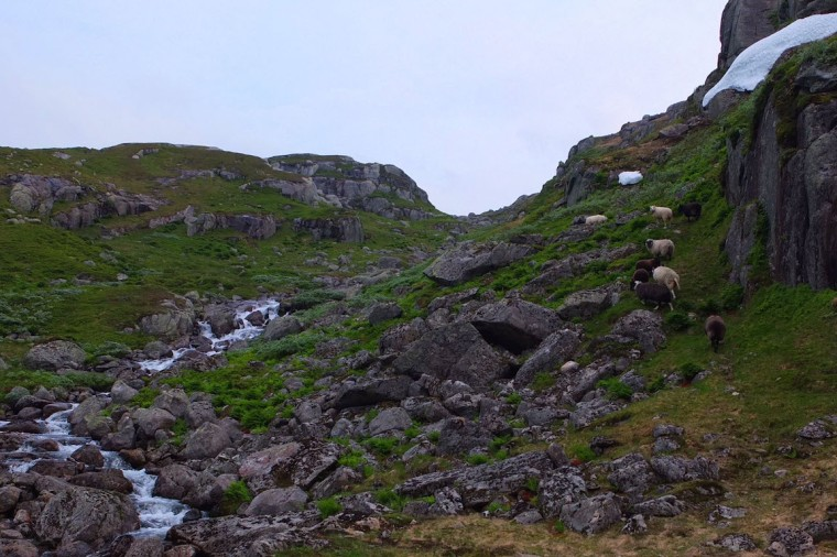 Sheep and Waterfall